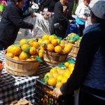 Image for the Tweet beginning: Edison School's Second Harvest Food