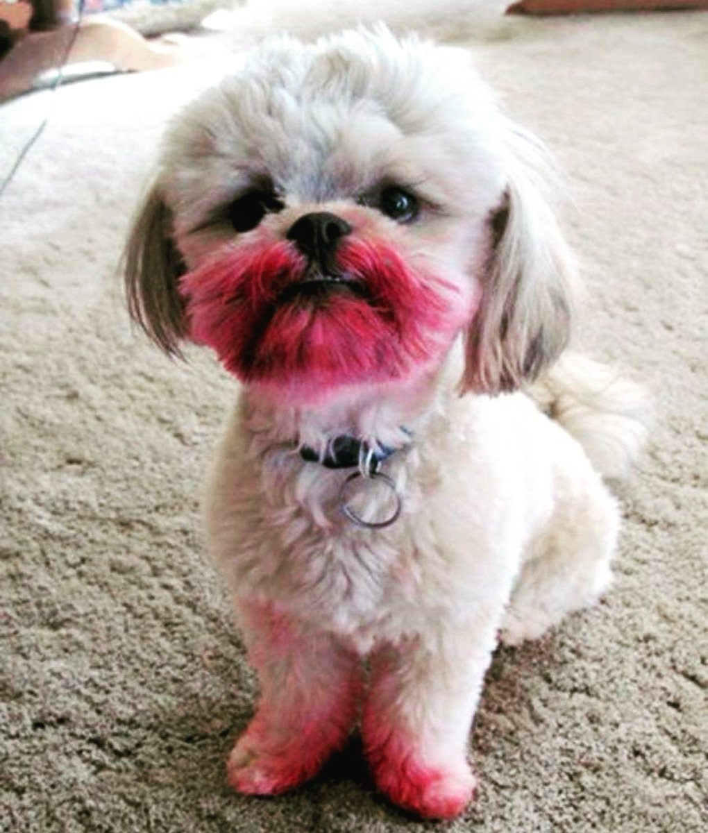 Don&#39;t angry on me, I just tried some makeup to look cute mom  #dogmom #dogsoftwitter #dog #doglovers #doggie #doggo #lovedogs #LoveYourPetDay #DogLife #dogsofinstagram #lifewithdog #dogfriendly #puppies #cutedogs #cutedog #dogoftheday #doggos #dogsocietyy #Followus<br>http://pic.twitter.com/yXUZe6UTP7