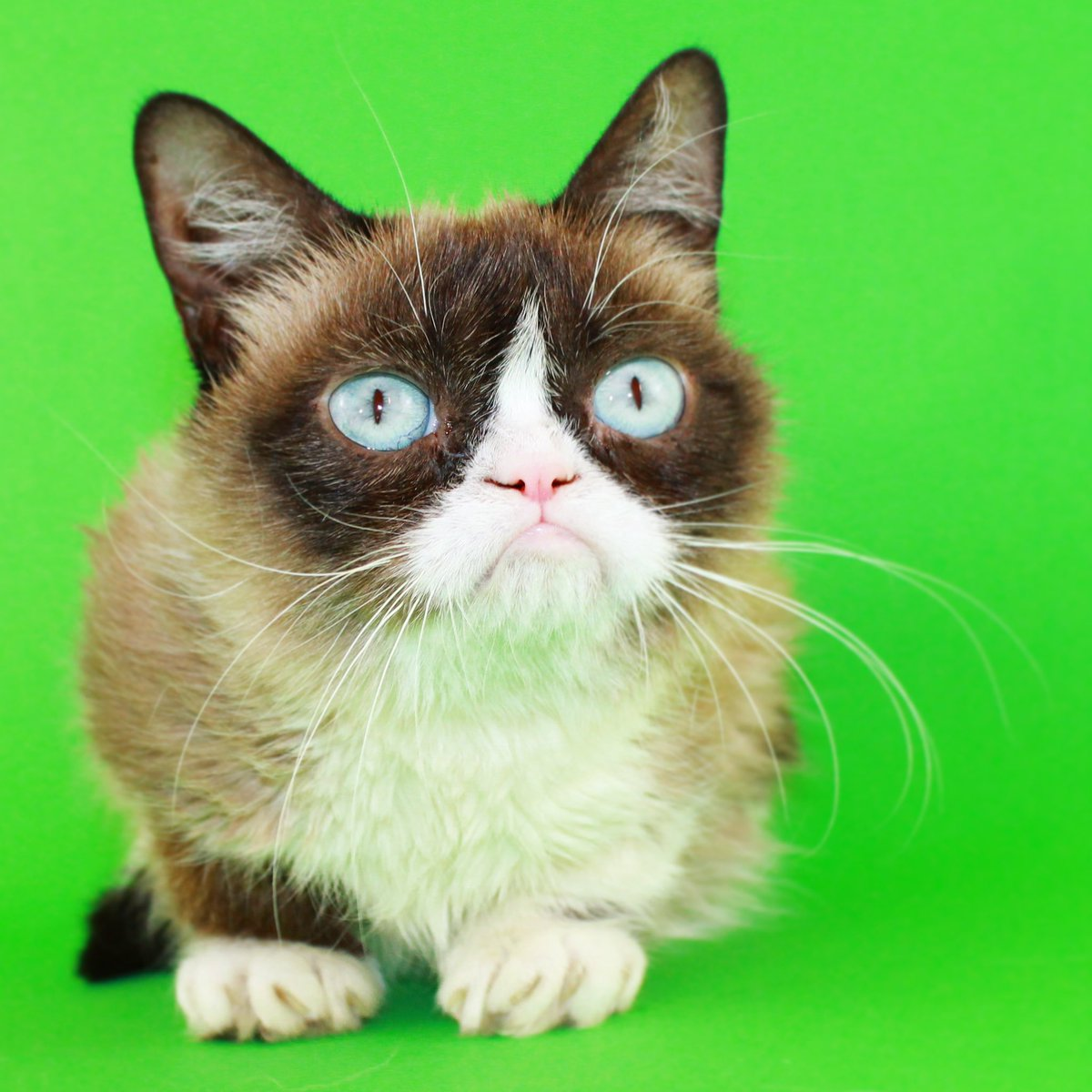 Image of: Movie Grumpy Cat Followed Twitter Grumpy Cat realgrumpycat Twitter