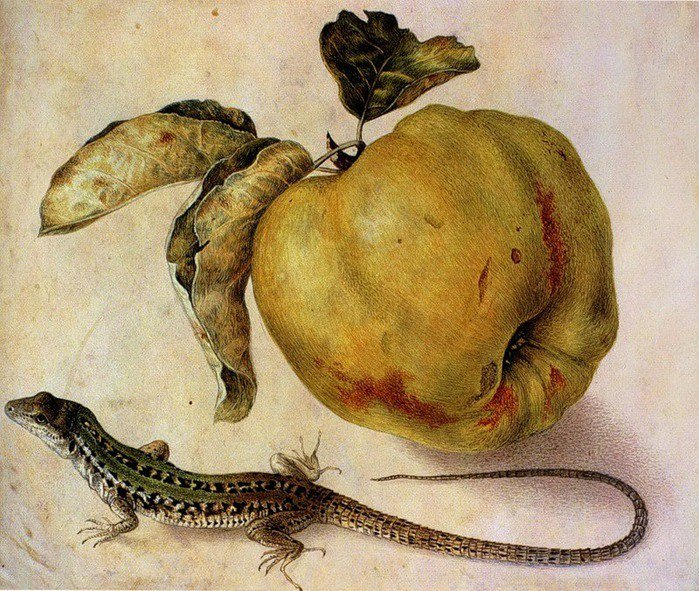 Still life with quince and lizard, (mid 17thc) by Giovanna Garzoni, Italian Baroque era artist #womensart