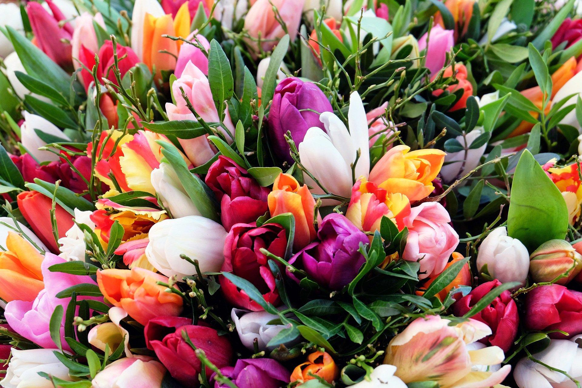 Цветов, самые красивые букеты тюльпанов в мире