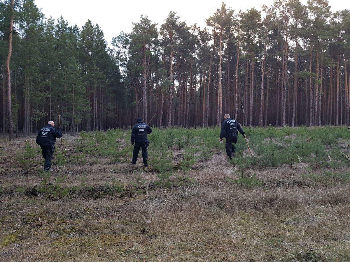 Waldstück bei Storkow