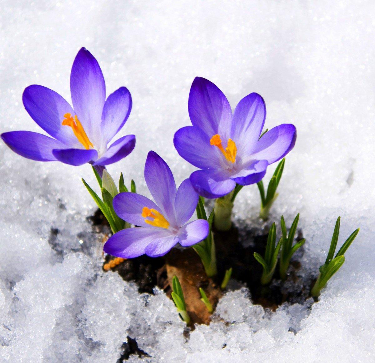 Цветы и поздравленья с днем весны