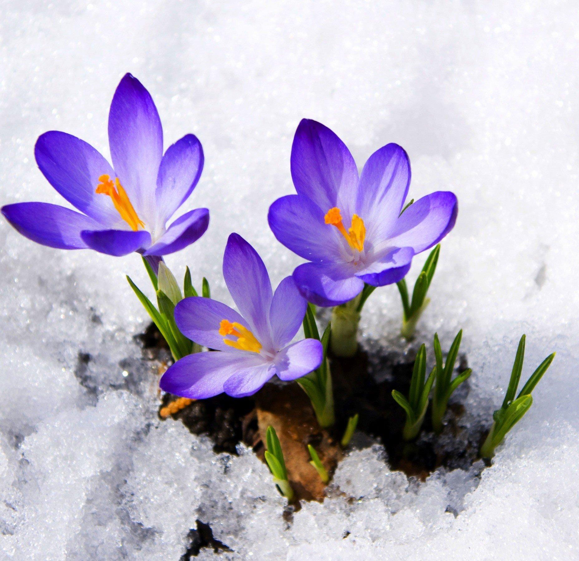 первое марта картинки красивые