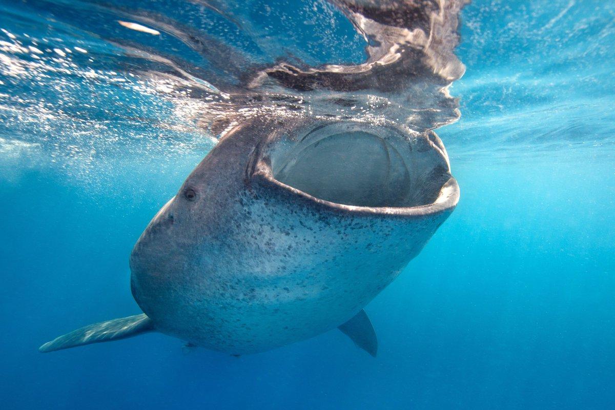 Whale Shark Rocky's photo on Sharks