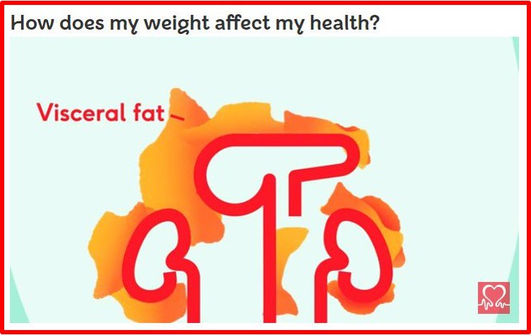 Visceral Fat Cv Risk How Does My Weight Affect My Health