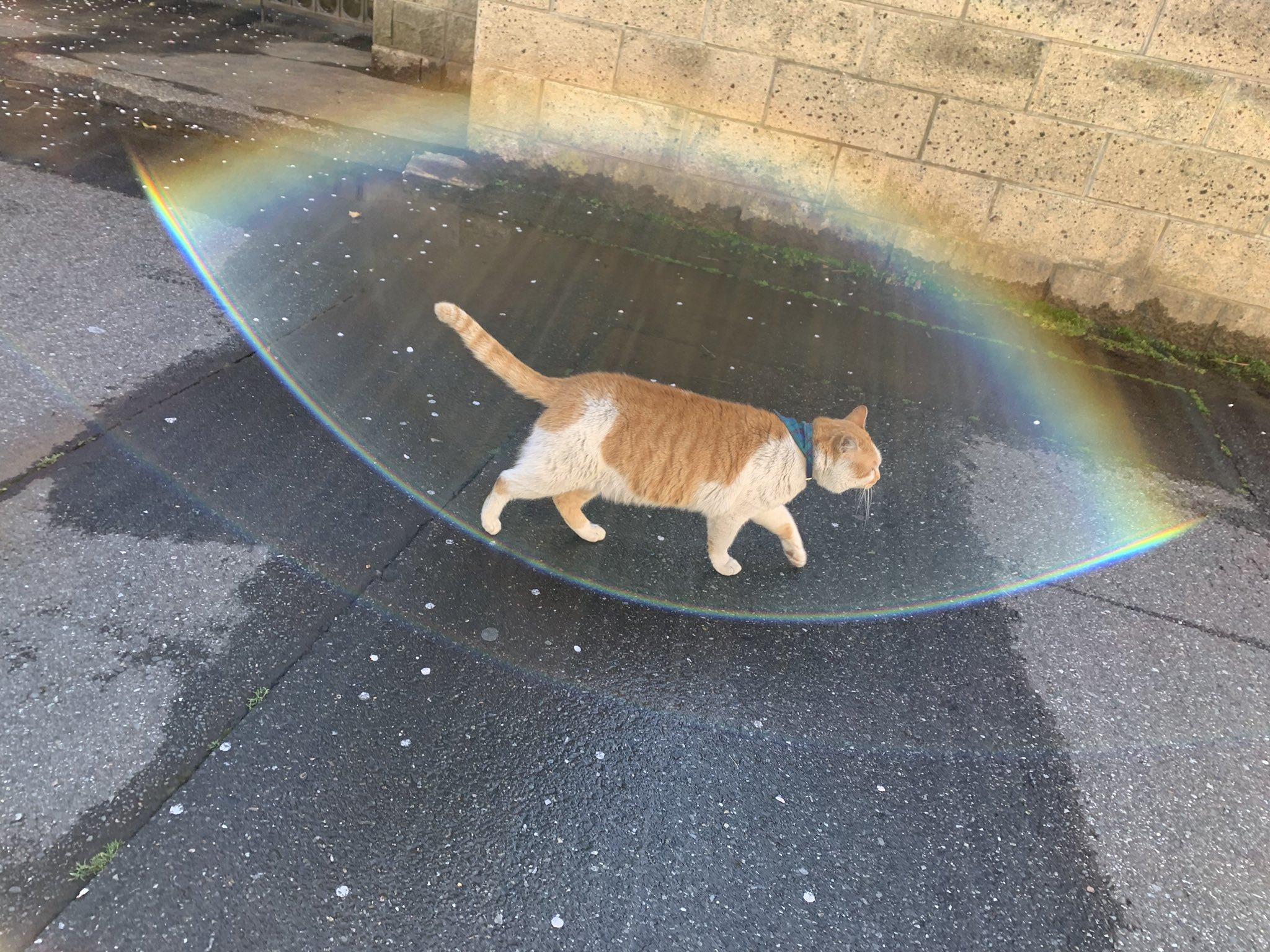 出勤途中に近所の猫撮ったらバリア展開されたわ