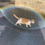 猫から虹色のバリアが出てる!これは凄い!