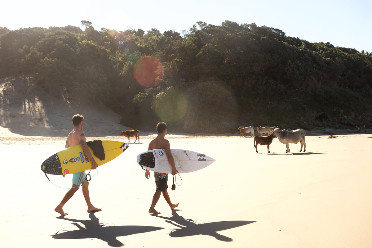 Look at these lucky animals...  The cows have it pretty good too.  #LifesBetterInBoardshorts