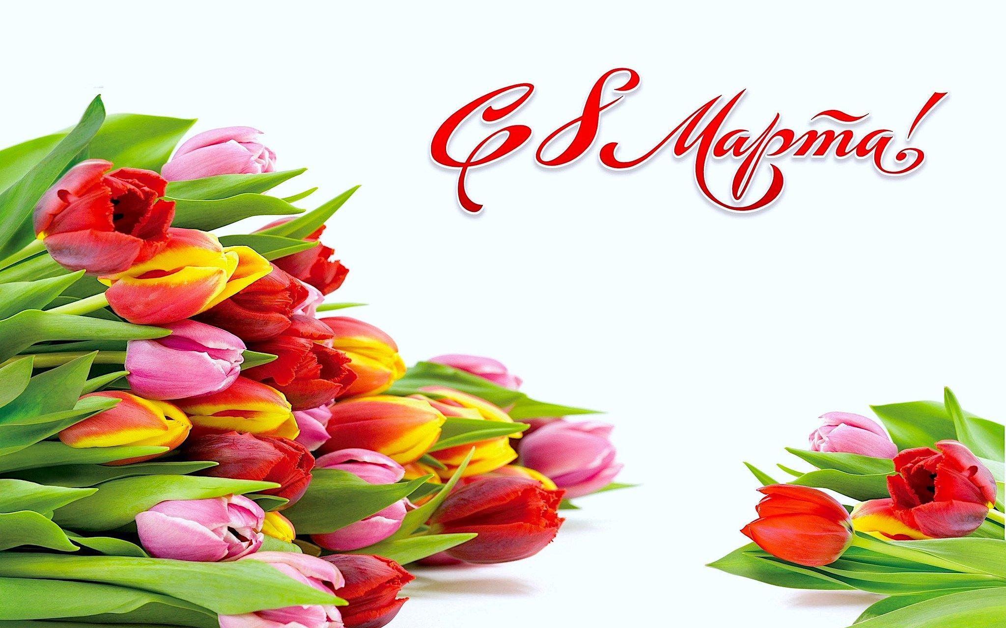 Скрап, открытки с тюльпанами и поздравлениями