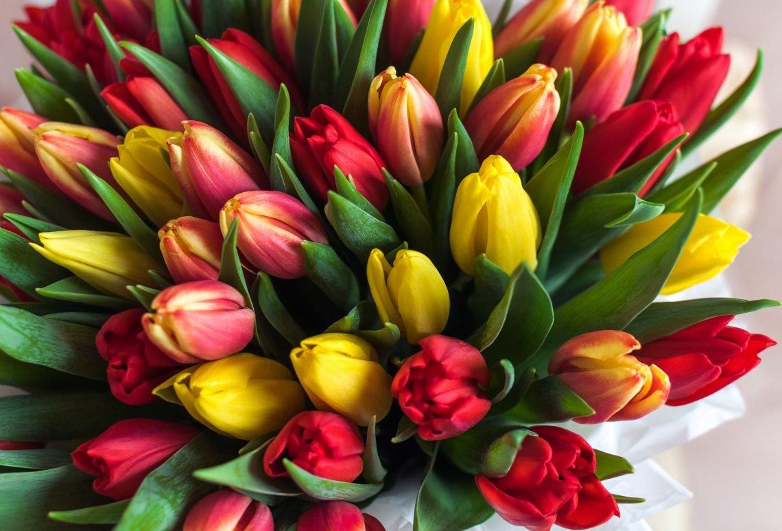 слух много тюльпанов в букете картинки папарацци тоже удавалось