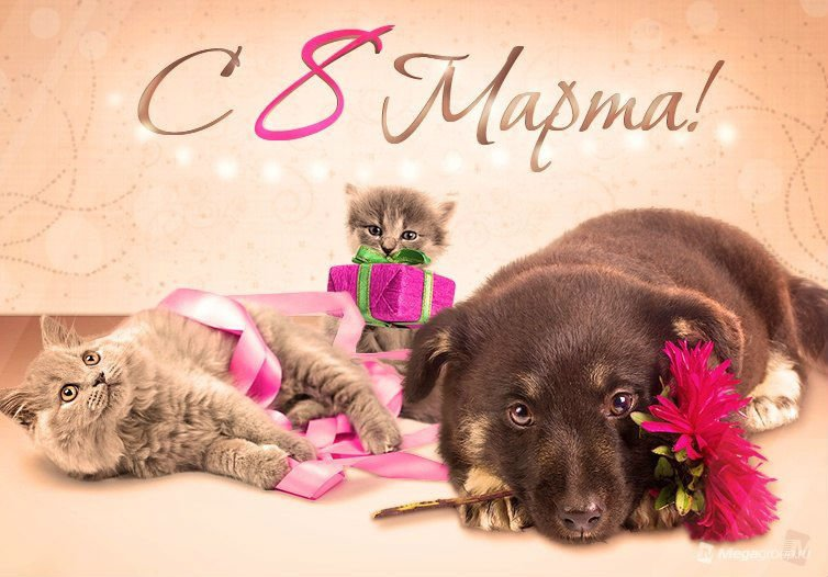Картинки с 8 марта с щенками