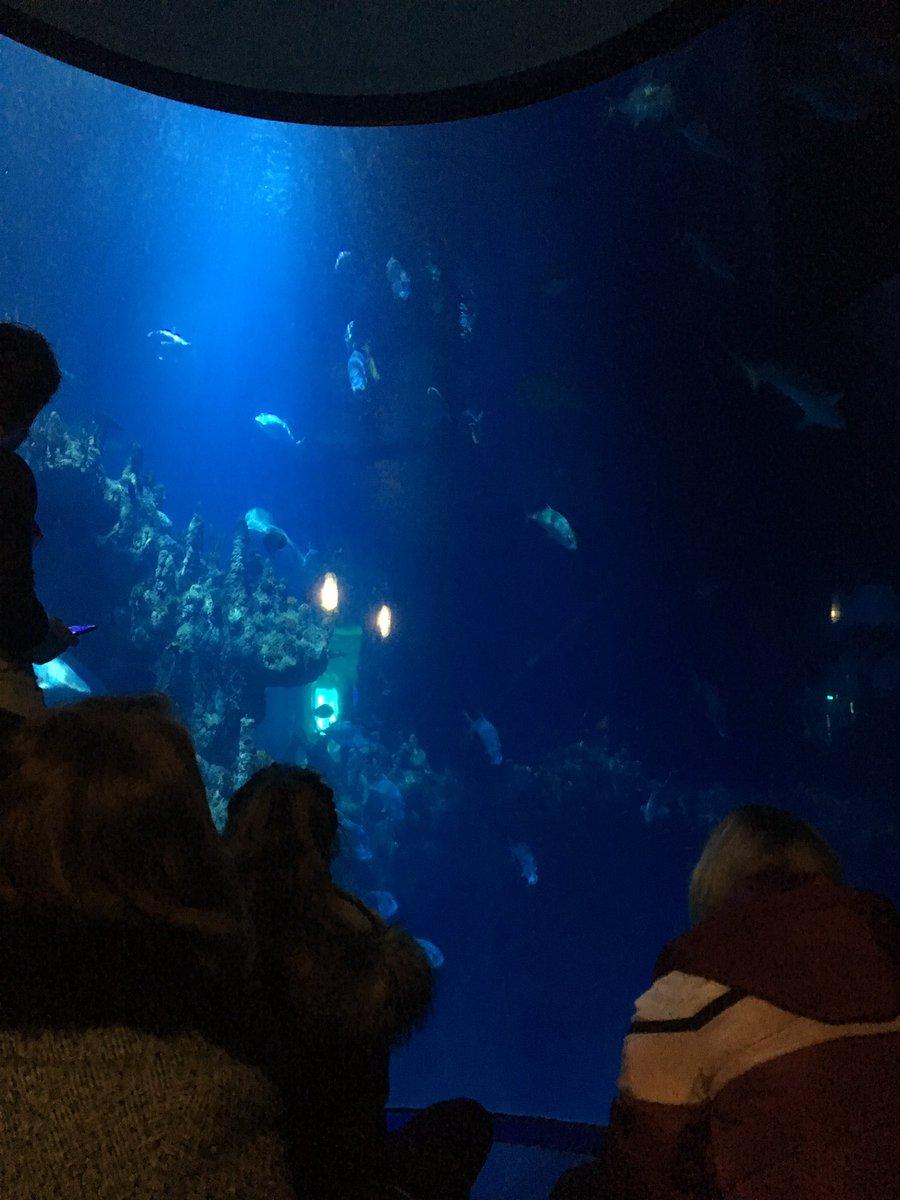 Lesley Morrell's photo on Sharks