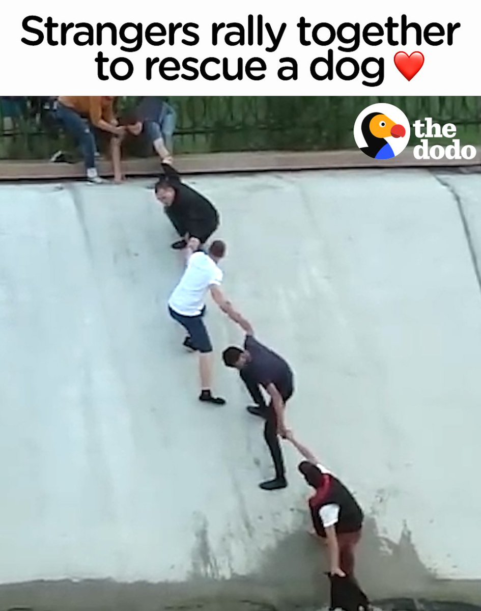 Total strangers form a human chain to rescue a dog ❤️