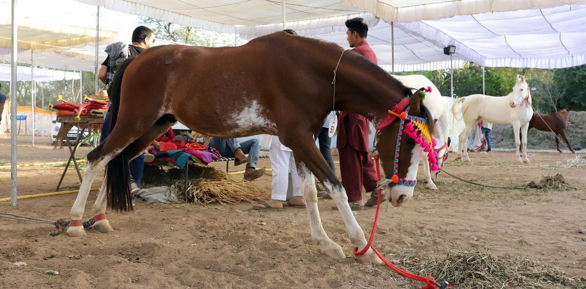 Gujarat Police to hold camps for recruitment of horses
