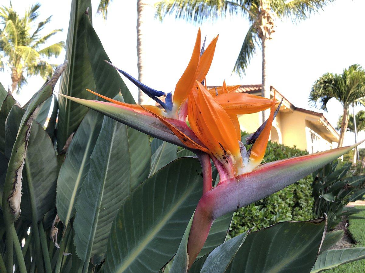 todddmader Florida state bird Download Photo   Twitur