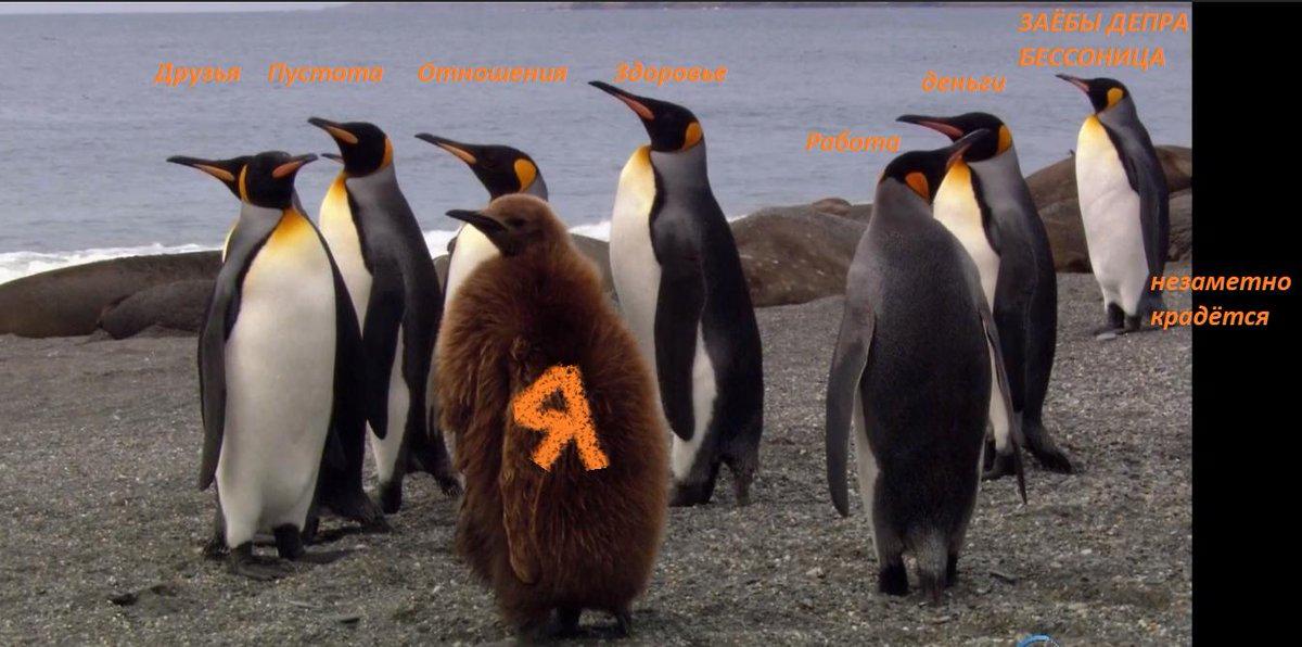 Пингвин кланяется картинка