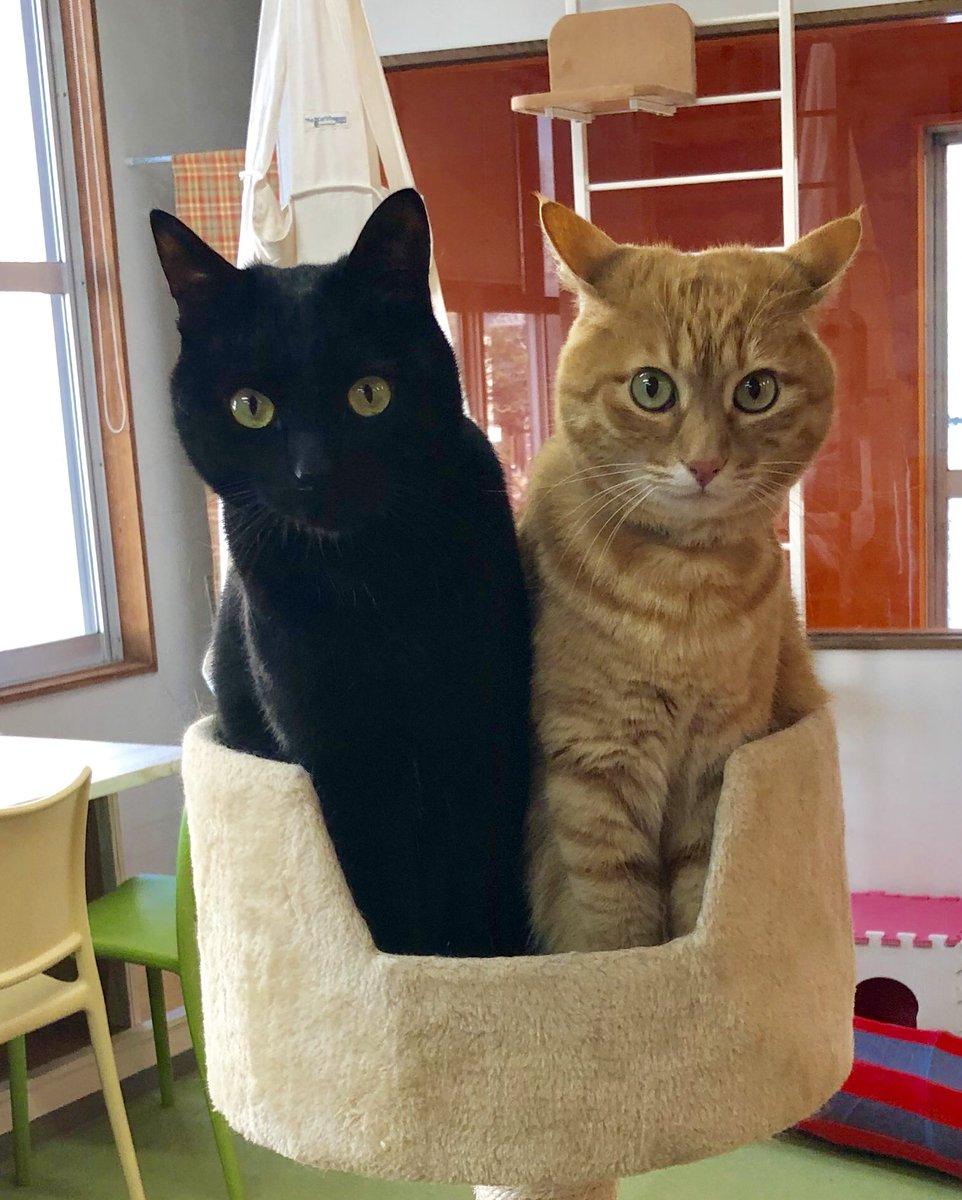 どんなに狭くても一緒にいたいノブ💕😭健気です… #美観neko #猫カフェ #美観地区猫カフェ #黒猫 #茶トラ #猫のいる生活 #猫 #アニマルカフェ #catcafe #Catholic #catstagram #ネコスタグラム #みかんねこ #ねこ好き