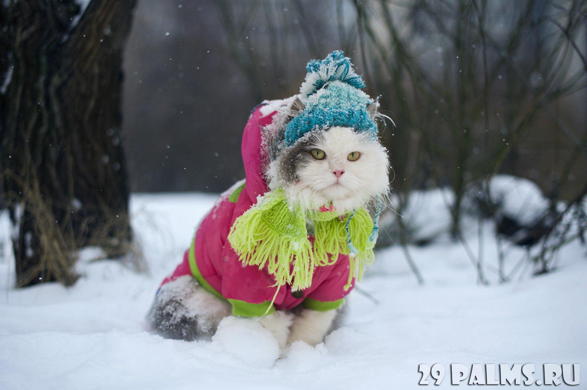 картинки одеваемся теплее нашей