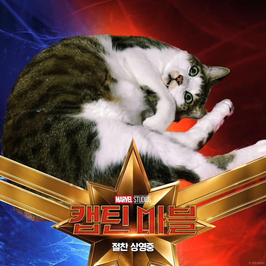 Put Your Cat in a Captain Marvel Poster
