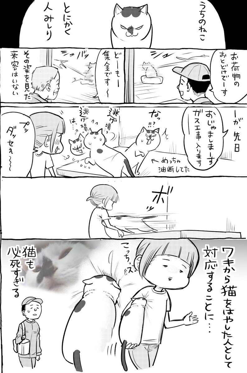 犬と猫の来客時の対応が真逆すぎて草wwどっちも必死ww