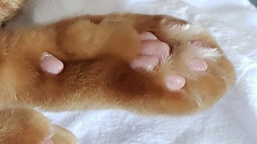 I post some images of cat paws and y'all just gonna hit like on it.