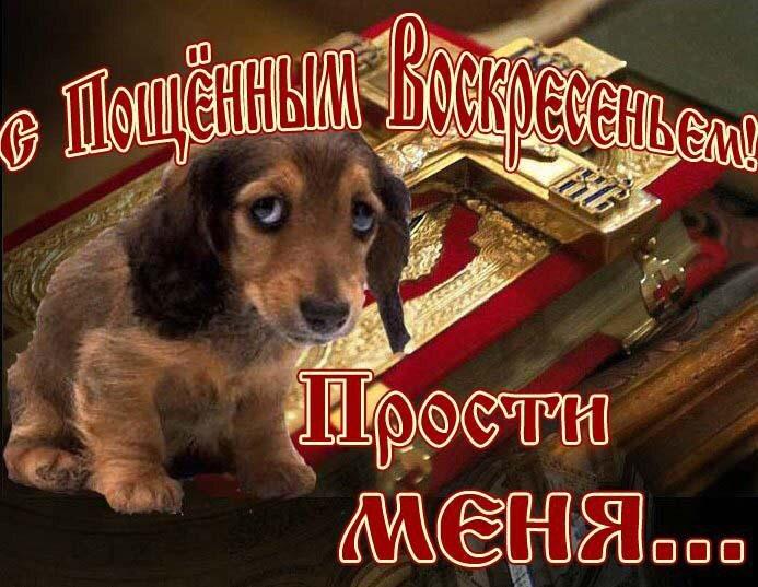 Прощеное воскресенье открытка щенок на руси заведено