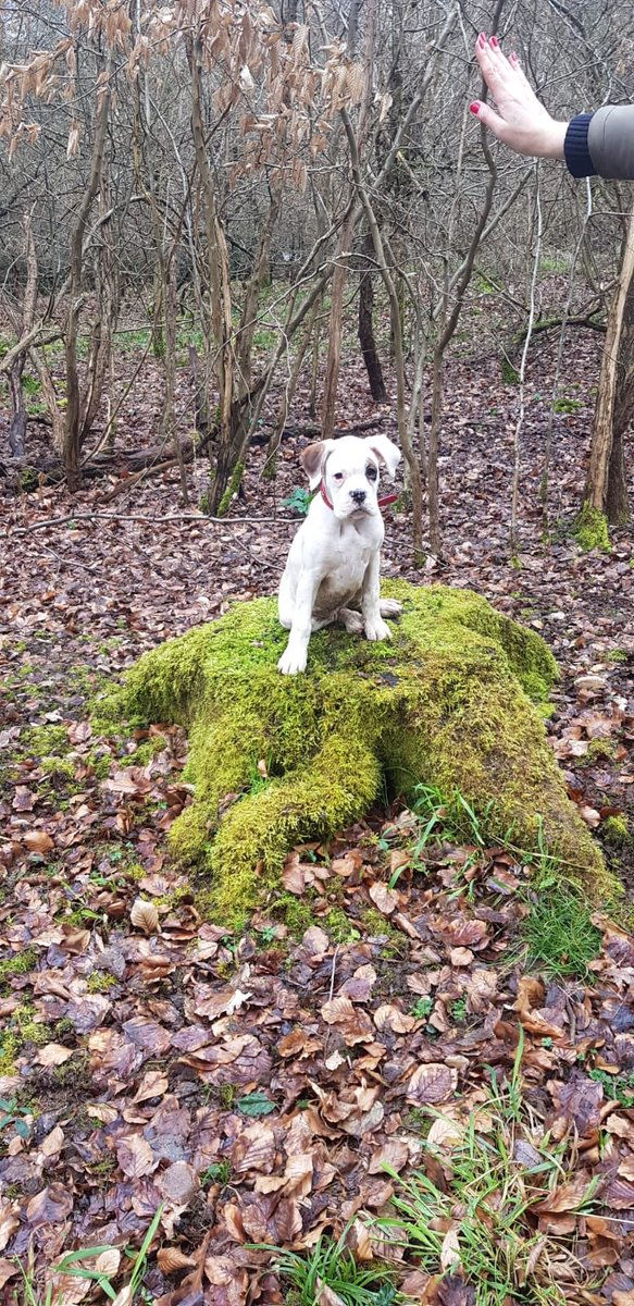 Ana Richmond-Brown's photo on #Dave