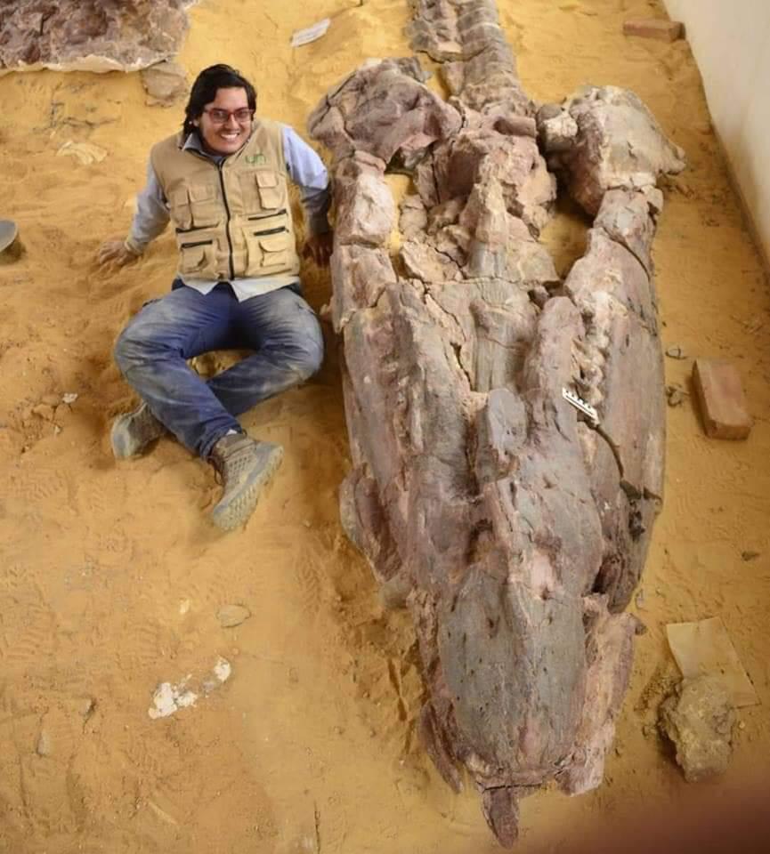 Pliosaurs Fossil