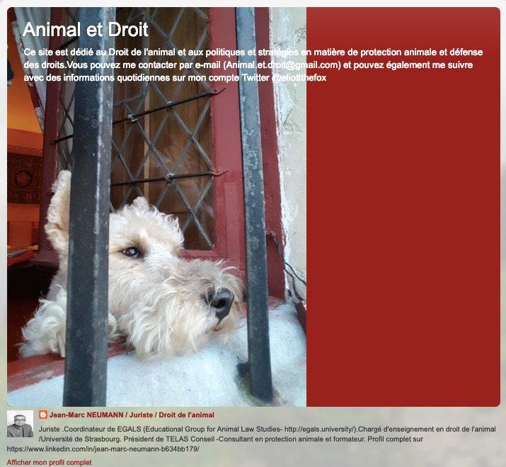 huge discount 6ce27 d7cae Relation Homme Animal par  Eliottthefox   https   youtu.be pe8hKMuXa o   DroitAnimaux  ConditionAnimale  ProtectionAnimalepic.twitter.com i3hi1XDQGs