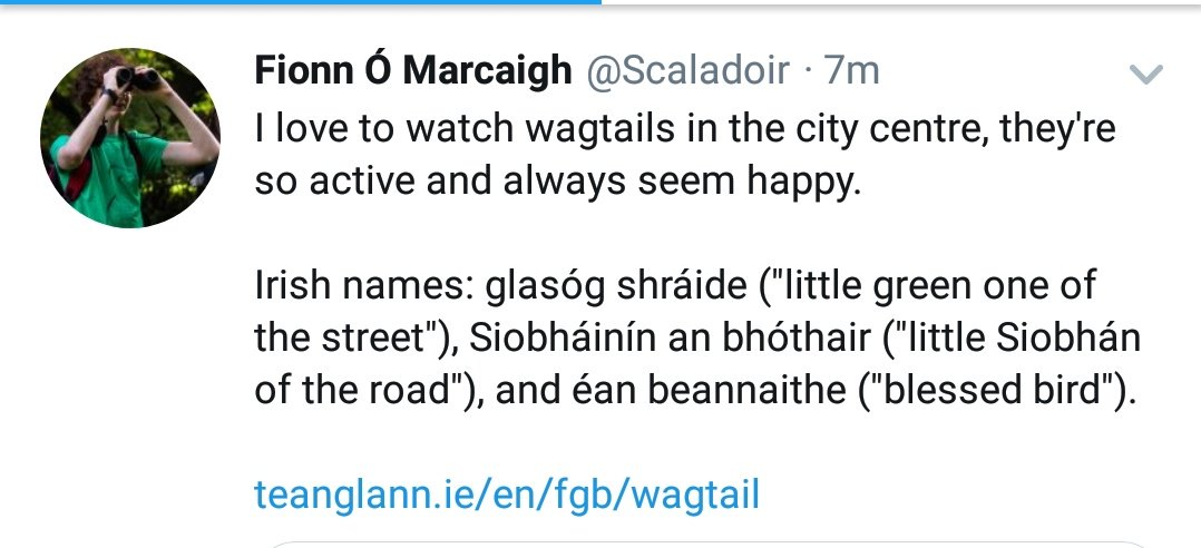 """Irish names for things always nail it. I love these for Pied Wagtails that @Scaladoir (Thanks dude) has just shared...""""Little Siobhán of the road"""", how would ya bate it!? @BirdWatchIE @Irishwildlife @NatureNymph @Biggyfin @EricTheBirdman @nialltkeogh @RobGMacfarlane @LiamLy"""