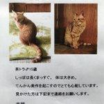 ネコを探しています!横浜市金沢区・茶トラ15歳♂