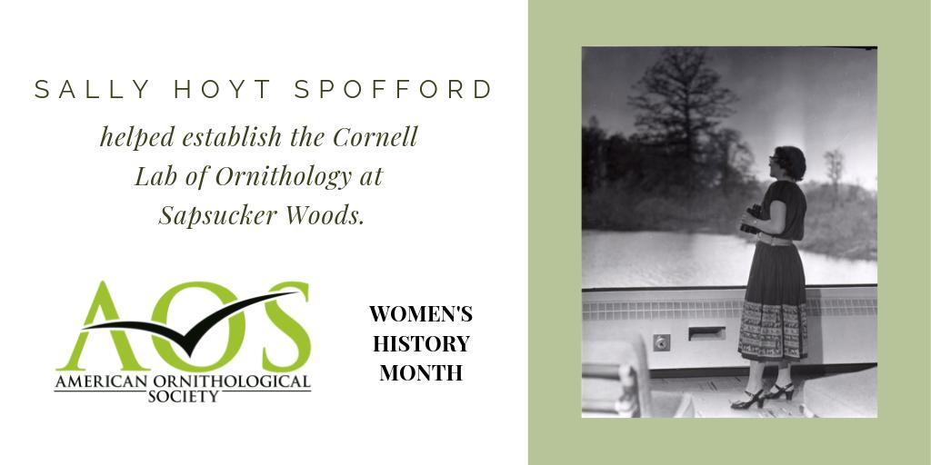 It's #WomensHistoryMonth, and we're featuring the stories of little-known women ornithologists on the History of #Ornithology blog. This week, get to know Sally Hoyt Spofford and her contributions to @CornellBirds.  https://amornithhistory.org/2019/03/11/more-than-generous-help/ …