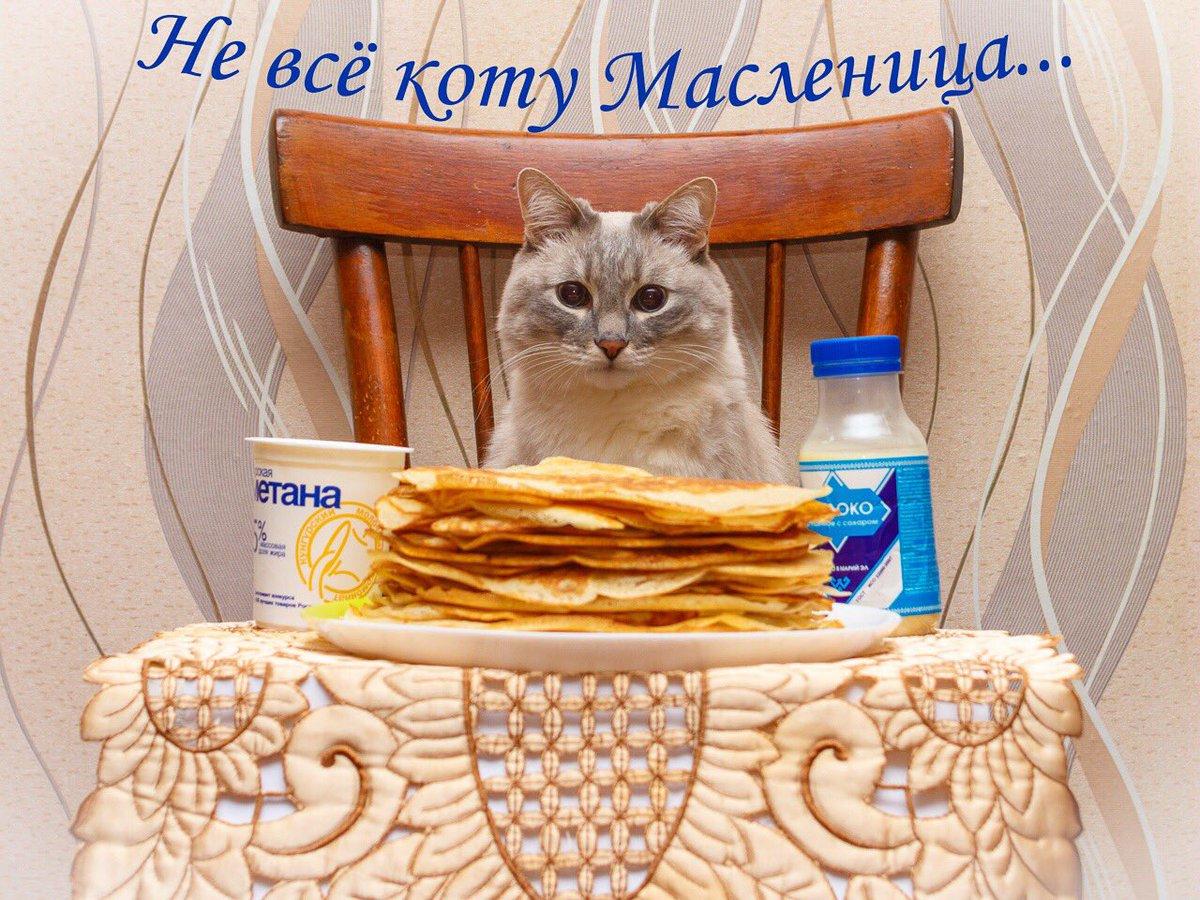 Открытки кошки и котята масленица