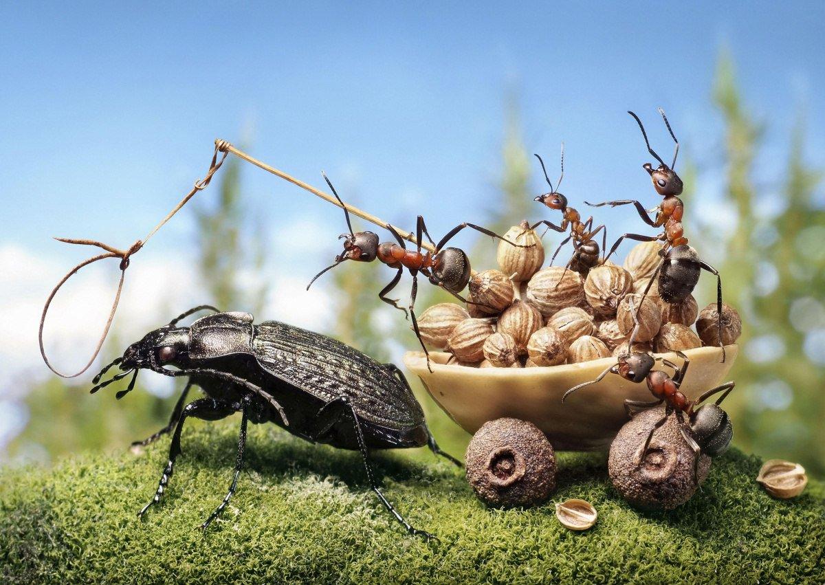 Картинки, приколы картинки с насекомыми