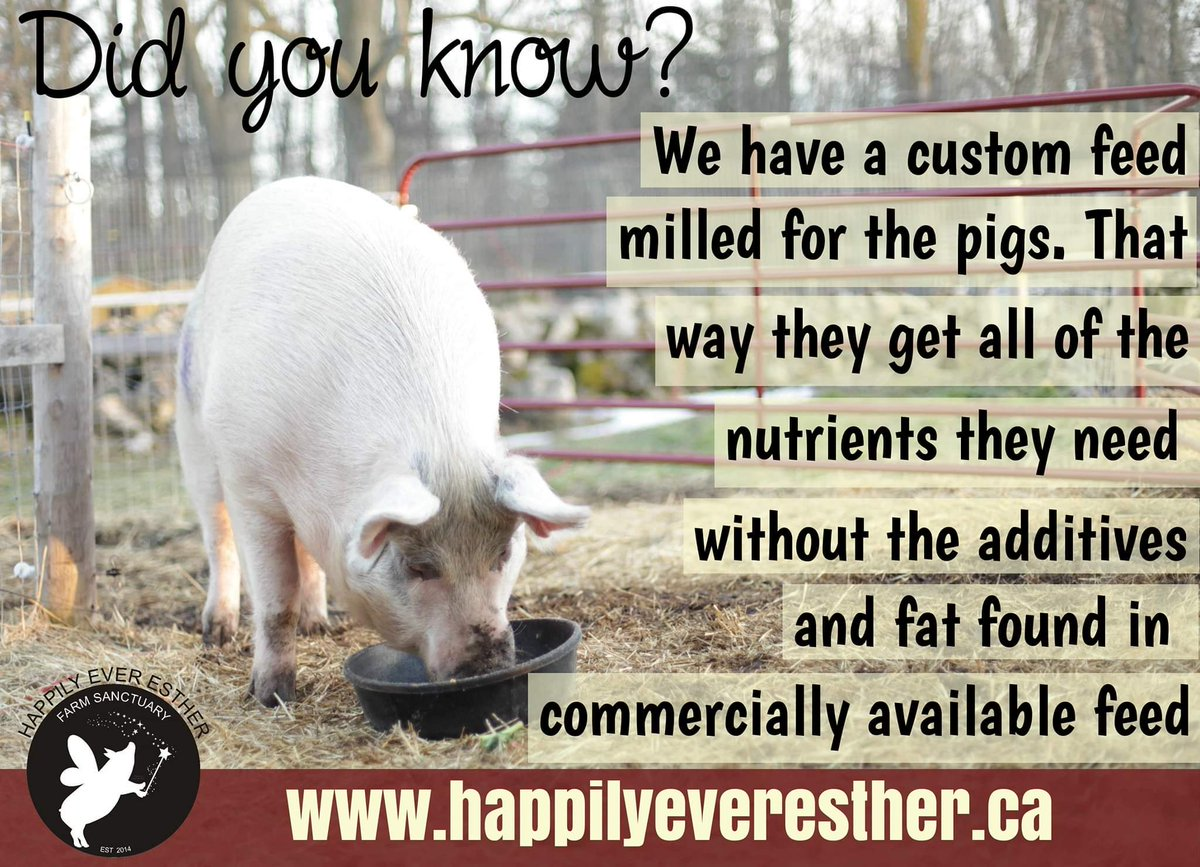 Happily Ever Esther Farm Sanctuary on Twitter: