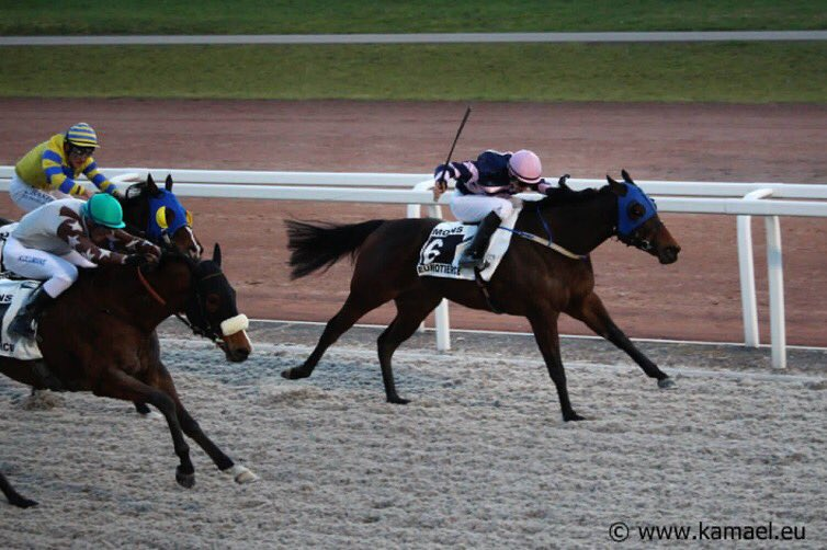 Yesterday evening at @HippoMons : 1-3-4-5  - 1st with #SnoozySioux and 3rd with #BlackSea Trainer: Toon van den Troost - Owner: Nicole Moons  - 4th with #TropicalWater and M. Bouckaert - 5th for G. Courbot and D. Dumoulin with the nice #Mesima  Photos: http://www.kamael.eupic.twitter.com/aCEMNWOy2E