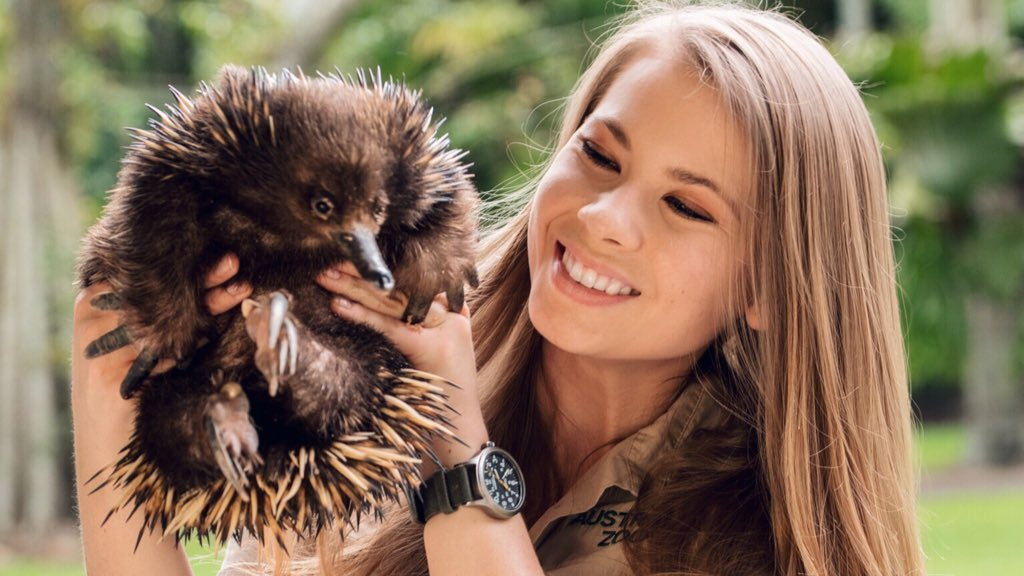 Any day that I get to spend time with my favourite little squishies is a good day! Echidnas make me so happy. Did you know that a baby echidna is called a puggle? Could they get any cuter?!  You can meet our echidnas on your next #AustraliaZoo adventure: https://www.australiazoo.com.au/our-animals/animal-encounters/echidna-encounter.html…