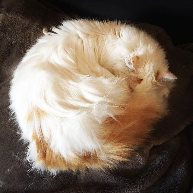#goodnight🌙 #whitecat #sleeping #catnap #kater #rolltsichein #schlafschön #catsofinstagram #klagenfurt