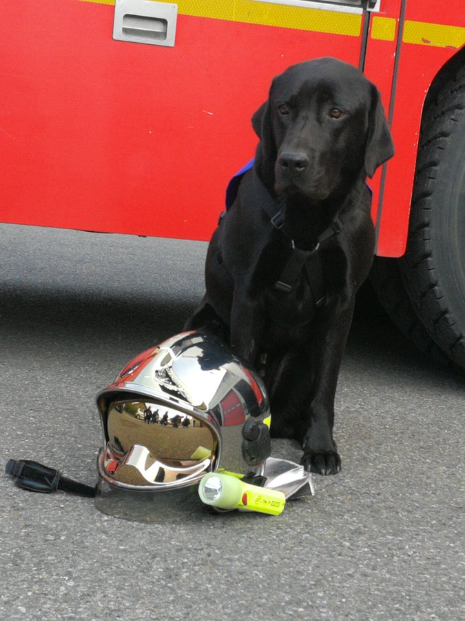 LOL, le premier chien d'assistance judiciaire en France aide à libérer la parole des victimes D1hpwvCX0AIuahy?format=jpg&name=900x900