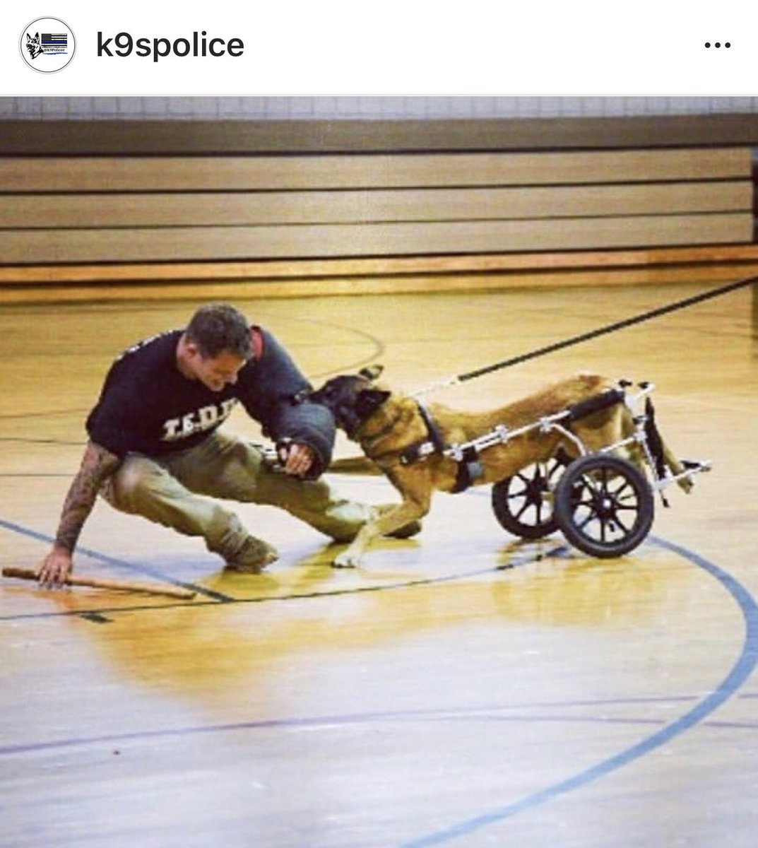 WOW. Just..... WOW!  Saw this on IG.  You can damage the body but not the spirit.  #maligator #inspiration #k9 #policek9 #policedog #livepdnation <br>http://pic.twitter.com/AVK6aEgXGk