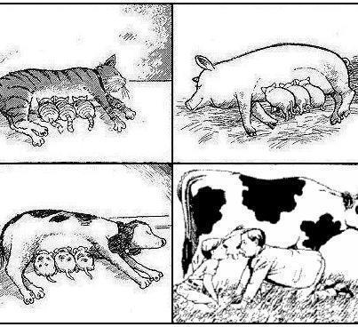 Drinking the milk of another species is disgusting and unnatural #DitchDairy #GoVegan<br>http://pic.twitter.com/Lwl4XD0wTt