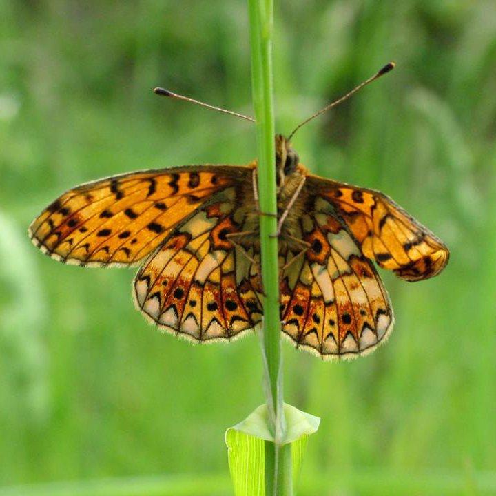 Whats on in Eden Valley: Gardening for Butterflies