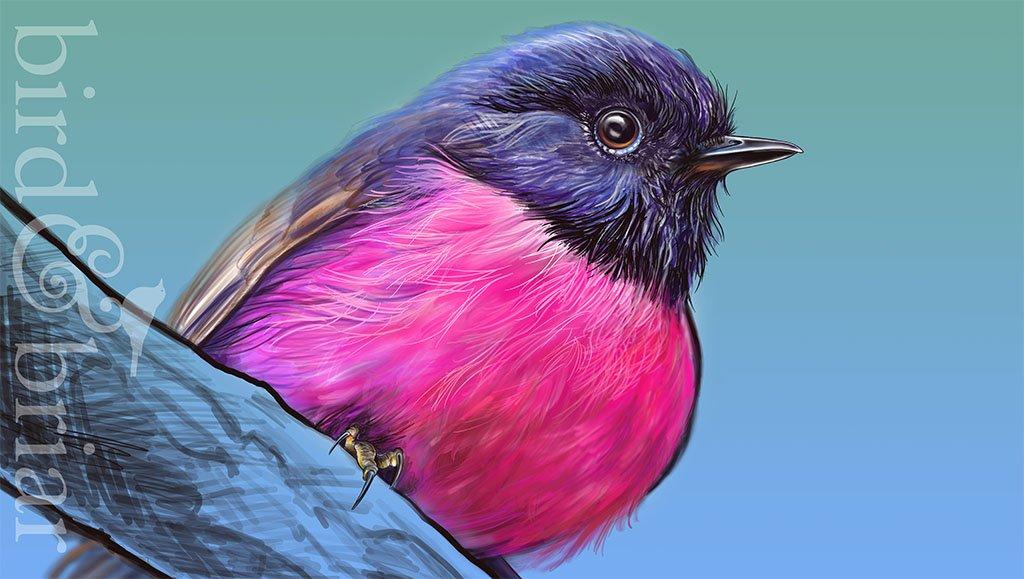bird & briar's photo on #colour_collective