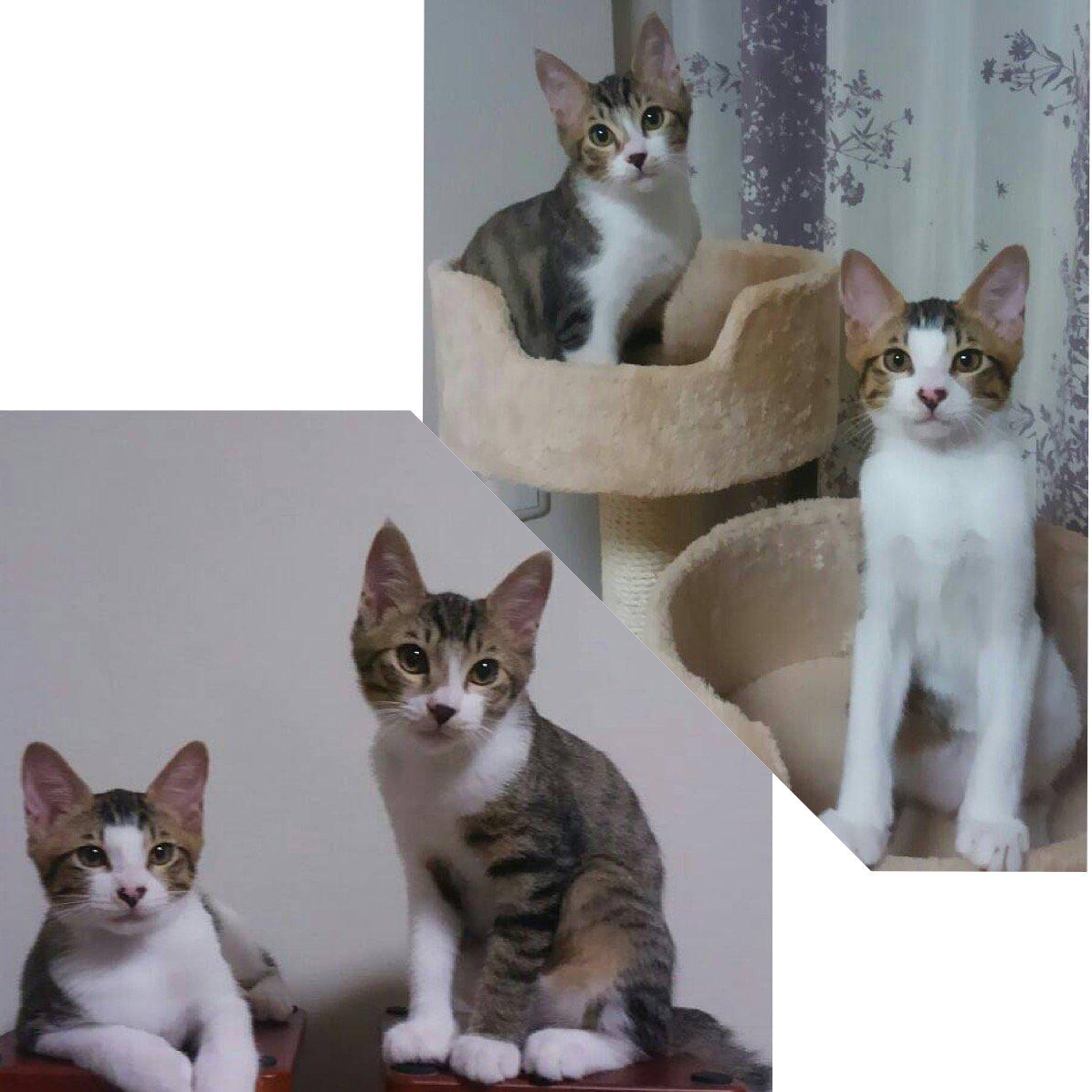 西東京市 地域猫の会