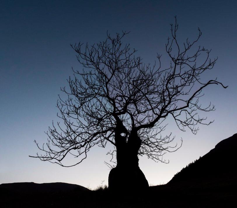 Robert Macfarlane's photo on #FolkloreThursday