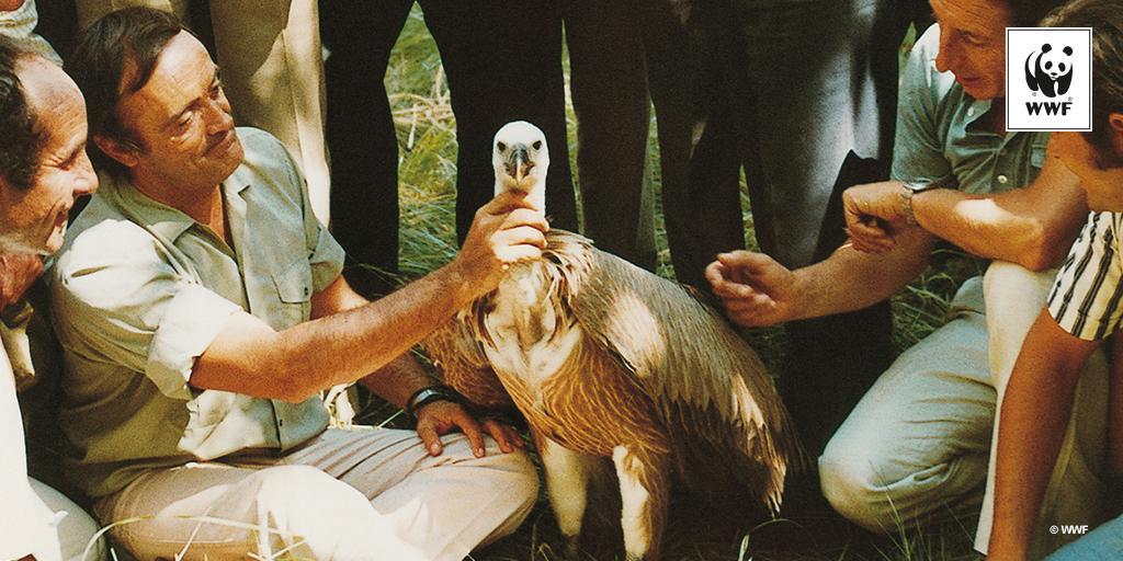 WWF España's photo on Felix