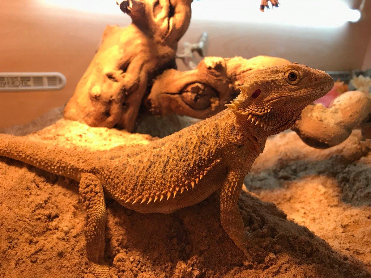 Blackpool Reptiles & Aquatics LTD (@BPLReptileShop) | Twitter