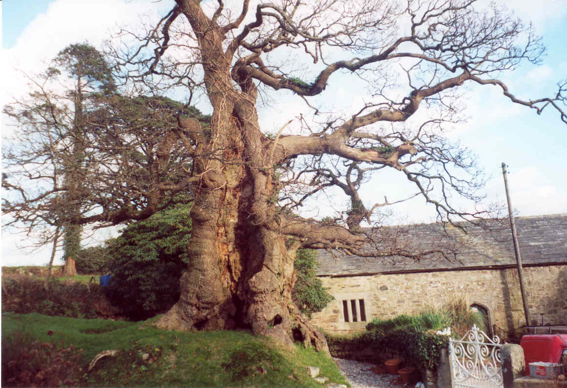 The Tree Council's photo on #FolkloreThursday