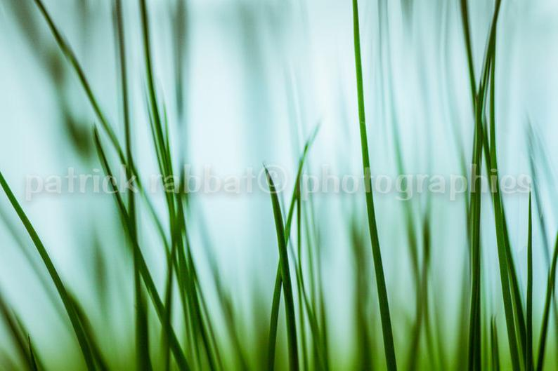 Elke Armour on Twitter: Blades of Grass Photo Fine Art Photography Summer Surreal Modern Minimalist Grass Green Blue Zen Décor Vibrant Art Splash of Colour #photo #zen #nature #etsy